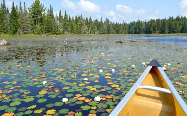 またカナダでカヌーを漕ぎたい